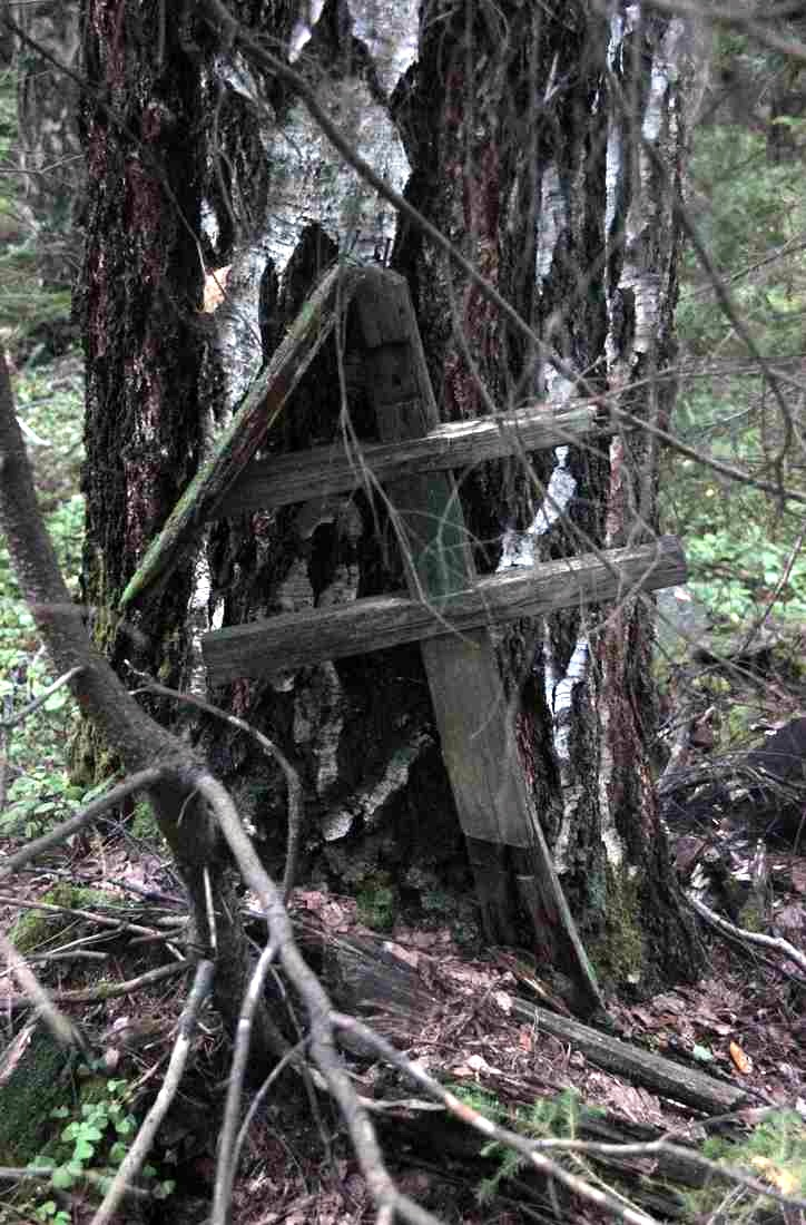 Старинное кладбище староверов у подножия Веселых гор. Кресты срослись с деревьями