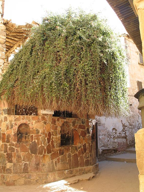 На территории монастыря Святой Екатерины растет Неопалимая купина — единственный куст терновника такого рода на всем Синайском полуострове