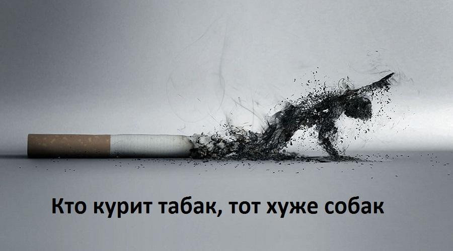 «Кто курит табак, тот хуже собак»