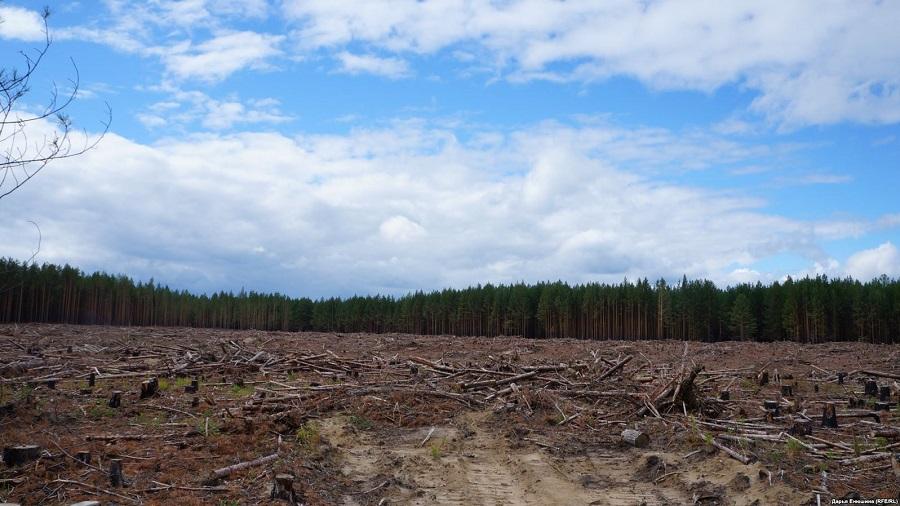 Масштабная вырубка леса у деревни Гарь. 2018 г.